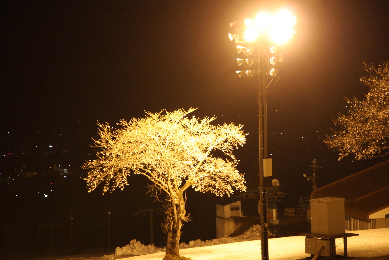夜桜スキー