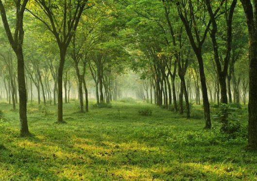 森の「力」